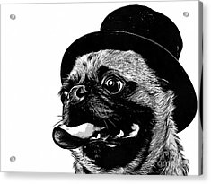 Top Dog Acrylic Print