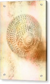Top Down View Of Spiral Sea Shell Acrylic Print by Jorgo Photography - Wall Art Gallery