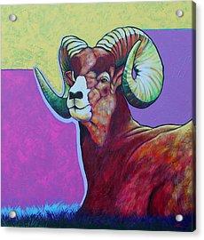Top Heavy Big Horn Acrylic Print by Joe  Triano