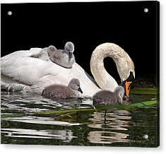 Top Of The Slide Acrylic Print by Gill Billington