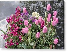 Top View Planter Acrylic Print