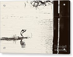 Top Water Explosion Acrylic Print by Scott Pellegrin