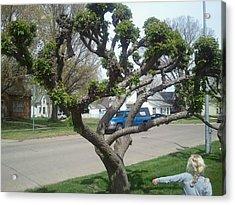 Topiary Pella Tree Acrylic Print