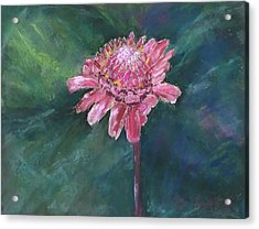 Torch Ginger Acrylic Print by Mary Benke