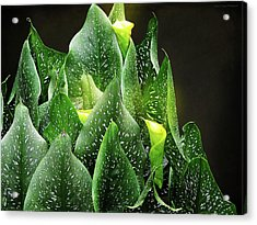 Torches - Calla Lilies Acrylic Print by Michael Taggart II