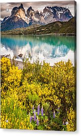Torres Del Paine Reflection - Patagonia Photograph Acrylic Print by Duane Miller