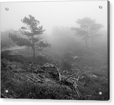 Torrey Pines In Fog Acrylic Print by Joseph Smith