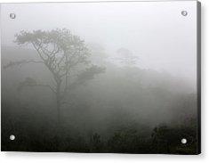 Torrey Pines With Coastal Fog Acrylic Print by Robin Street-Morris
