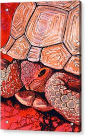 Tortoise Acrylic Print by Bonnie Kelso