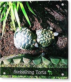 #tortoise #torts #sunbathing #garden Acrylic Print by Natalie Anne