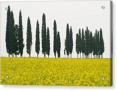Toscana Cypresses Acrylic Print by Igor Voljch