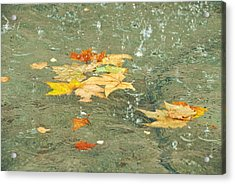 Tossed Leaves Acrylic Print by JAMART Photography