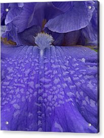 Acrylic Print featuring the photograph Totally Blue Iris by Jean Noren