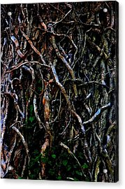 Totally Twisted In Yellow Springs Acrylic Print