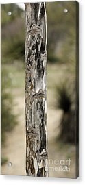 Acrylic Print featuring the photograph Totem Pole  by Viktor Savchenko
