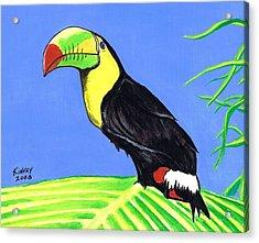 Toucan Bird Acrylic Print by Jay Kinney