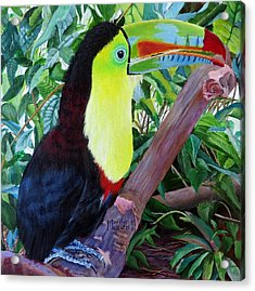 Toucan Portrait 2 Acrylic Print by Marilyn McNish