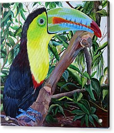 Toucan Portrait Acrylic Print by Marilyn McNish