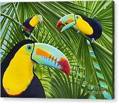 Toucan Threesome Acrylic Print