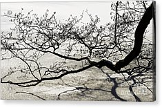 Wonderful Tree Acrylic Print