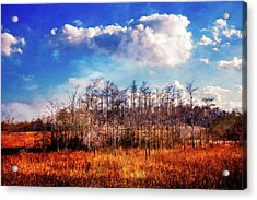 Acrylic Print featuring the photograph Touch Of Autumn In The Glades by Debra and Dave Vanderlaan