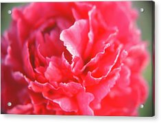 Touch Of Class Acrylic Print by Jonathan Michael Bowman