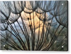 Touch Of Light Acrylic Print by Iris Greenwell