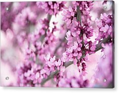 Touch Of Spring II Acrylic Print