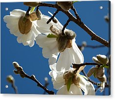 Acrylic Print featuring the photograph Touch Of Spring by Jane Ford