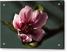 Acrylic Print featuring the photograph Touch Of Spring by Kathleen Stephens