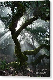 Touched By A Miracle Acrylic Print by JoAnn SkyWatcher