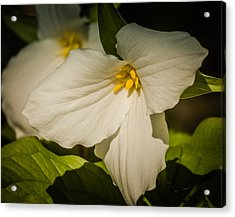 Touched By A Trillium Acrylic Print