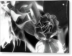 Touched By Light - Acrylic Print