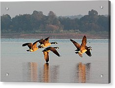 Touching Down At Sunrise Acrylic Print by Sheila Brown