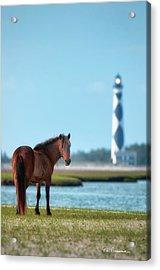 Tour Guide Cape Lookout 3509 Acrylic Print