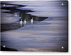 Tourist Swans Acrylic Print by Albert Seger