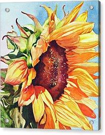 Tournesol Acrylic Print