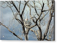 Acrylic Print featuring the photograph Tower And Trees by Valentino Visentini