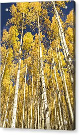 Acrylic Print featuring the photograph Towering Aspens by Phyllis Peterson