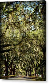Towering Canopy Acrylic Print