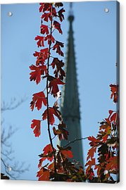 Towering Leaves Acrylic Print by Alfred Ng