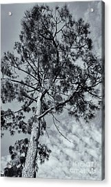 Acrylic Print featuring the photograph Towering by Linda Lees