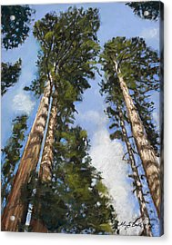 Towering Sequoias Acrylic Print by Mary Benke