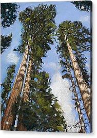 Towering Sequoias Acrylic Print