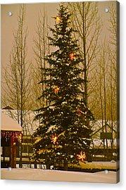 Town Tree Acrylic Print by Bob Berwyn