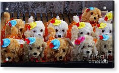 Toy Puppy Line-up Acrylic Print