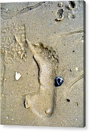 Traces Acrylic Print by Mary Sullivan