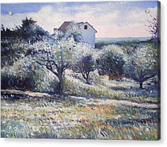 Track Leading Alongside Orchard With Farmhouse Near Monte Cardeto Italy 2009 Acrylic Print by Enver Larney