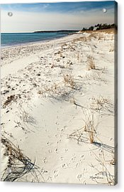 Acrylic Print featuring the photograph Tracks On The Beach by Michelle Wiarda