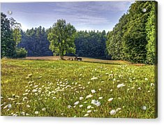 Tractor In Field With Flowers Acrylic Print